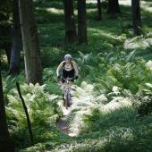 Jazda lesom na bicykli