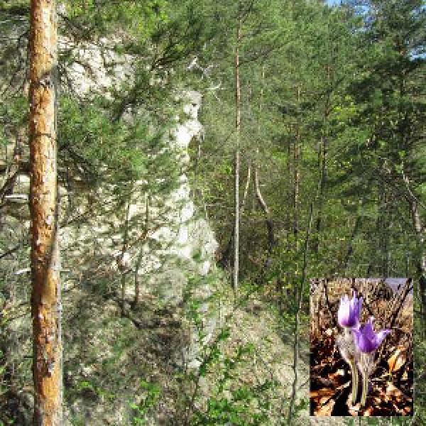 Chránené územie Drieňová
